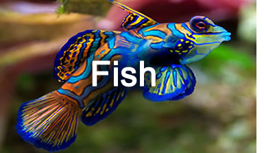reeffishcenter.shop